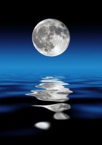 ירח מלא שור